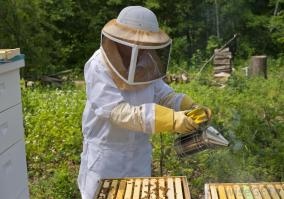 bee-keeper-with-smoker