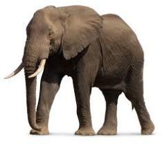 elephant brown