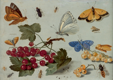 insect painting