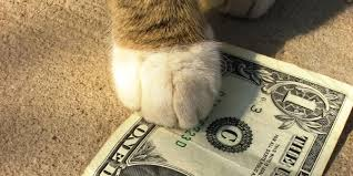 cat paw and dollar